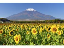 山の日の由来:なぜ8月11日が祝日になったの?